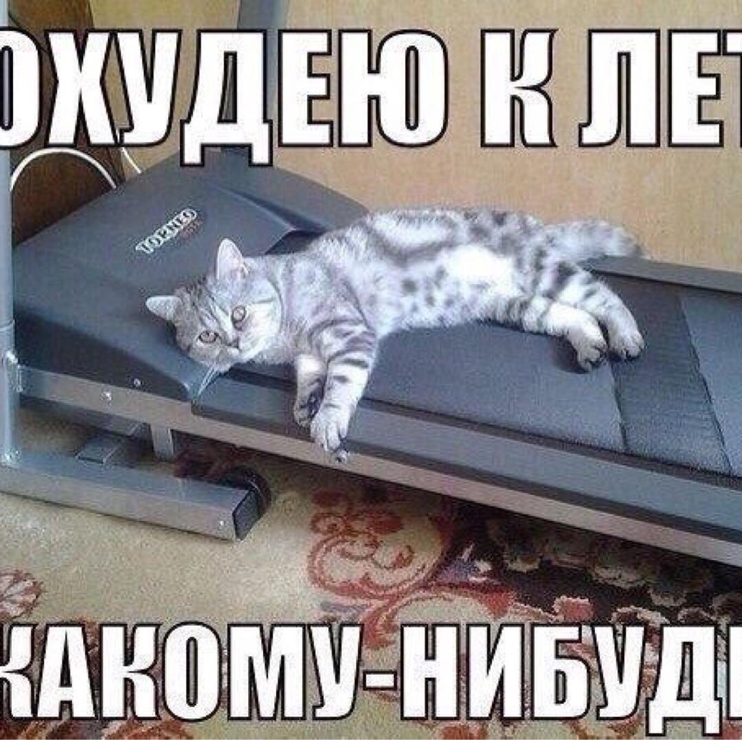 Кот Летом Похудел. Кот летом похудел. Кошка плохо ест
