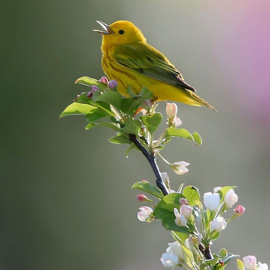 Открытки с днем птицы