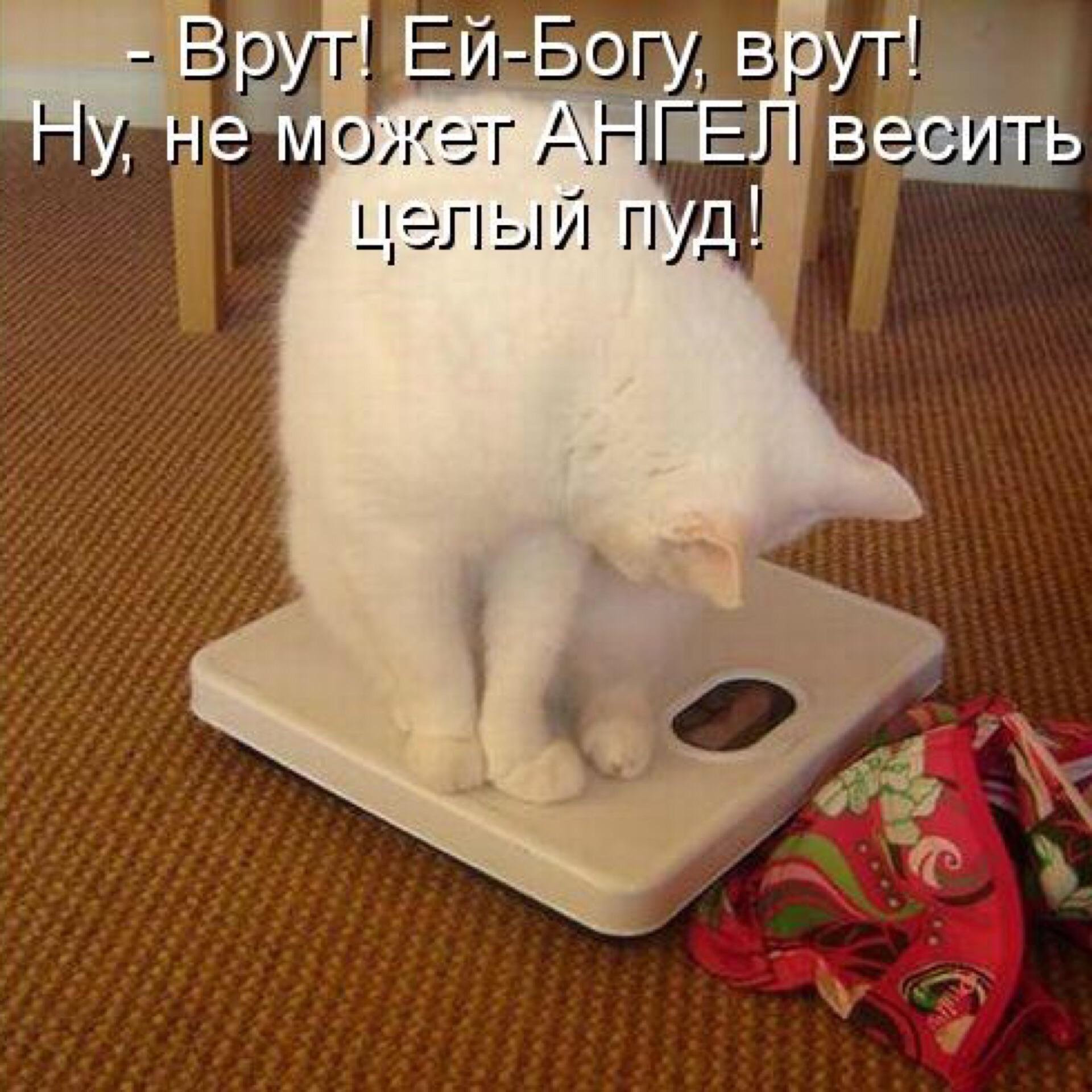 Кошка похудела и ничего не есть